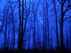 Foggy Morning.. (***TR.iPod) Tags: blue black fog scary nikon tripod www eerie arkansas mistry highway16 interestingness6 outstandingshots nikonstunninggallery abigfave impressedbeauty tripodphotos