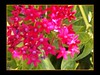 Nature's Flowerworks