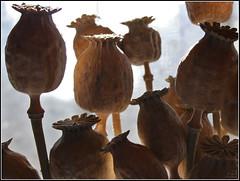 Itaca (Ubierno) Tags: españa primavera valencia spring spain pueblo alicante espagne printemps comunidadvalenciana amazingtalent aplusphoto elventós ventós ubierno