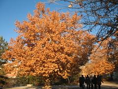 (Marchnwe) Tags: autumn nice beytepe