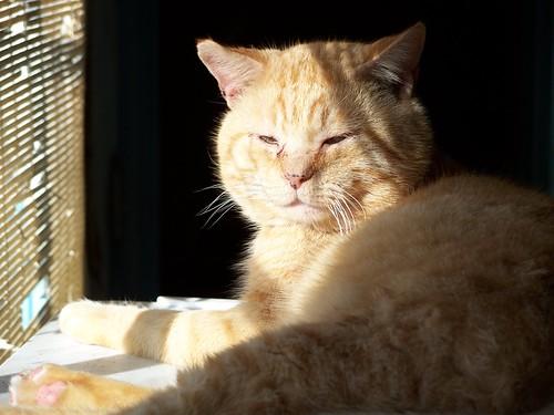 Max in the sun.
