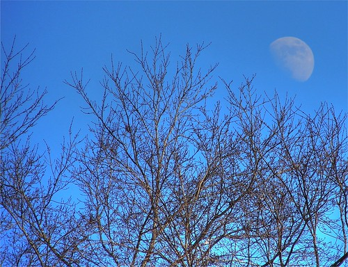 Moon in the Treetops