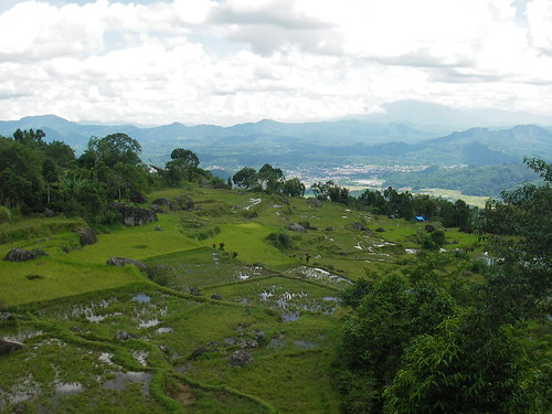 Toraja rice terraces
