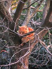 Sciarpina sull'albero.