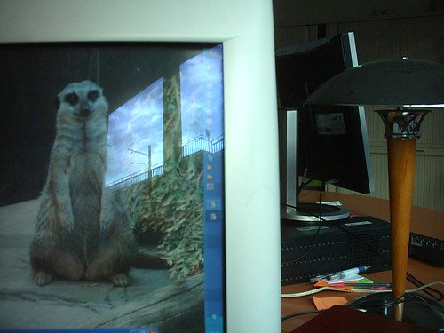 pluged numb meerkat screen saver
