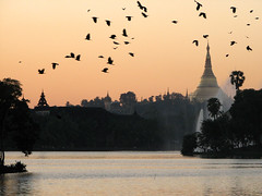 cawing of the crows (flappingwings) Tags: lake shwedagon yangon burma myanmar crows kandawgyi