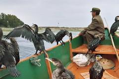 The birds (GinoDecubber (and about 5,776,500 Kyrgyz people)) Tags: hello china yunnan dali miss jiang jianshui