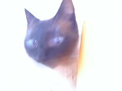 cato fantasma (Hev Mascareas) Tags: cat amor fear ghost gato fantasma riqueza uau medo selvagem sobrenatural pepeu