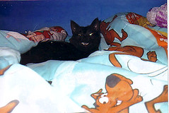 Pepper (SuzanneR) Tags: cat feline kitty kissablekat tunafished