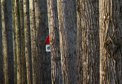 Just give me a sign (Harry Mijland) Tags: trees holland sign bomen funny nederland alpha trafficsign a100 breukelen verkeersbord grappig drempel dearharry harrymijland