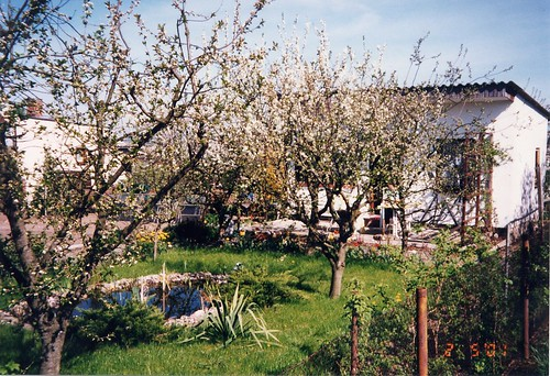 Frühling im Schrebergarten