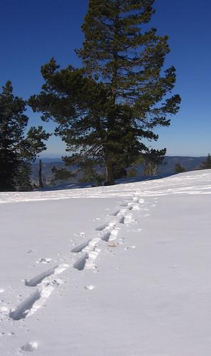 Snowshoe tracks, Yosemite