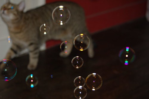 Mocca chasing bubbles
