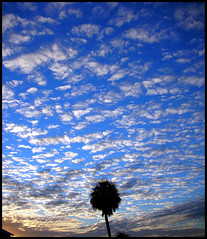 Sunset Lake Dora (twoblueday) Tags: sunset sky topf25 clouds landscape bravo florida palm explore mountdora mtdora interestingness108 instantfave i500 lakedora abigfave explore1feb2007