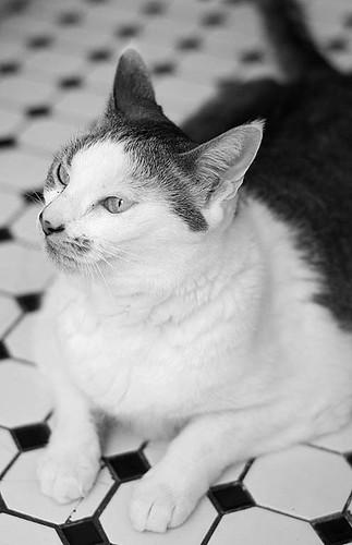 POS Cat #2