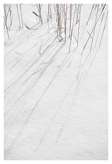 (scottintheway) Tags: winter shadow sun white snow canada cold detail grass wheat minimal saskatoon saskatchewan minimalistic minimalist subtle nops
