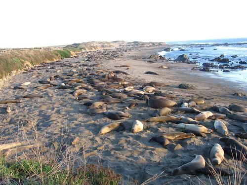 Seals!