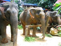 Наши слоники.