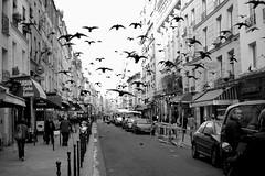 La patrouille des pigeons givrés (Hughes Léglise-Bataille) Tags: street blackandwhite bw paris france topf25 birds topf50 nikon noiretblanc pigeons streetphoto d200 topf100 topf200 2007 topv1000 topv2000 topv3000 expd wnwthebirds bestofr ysplix