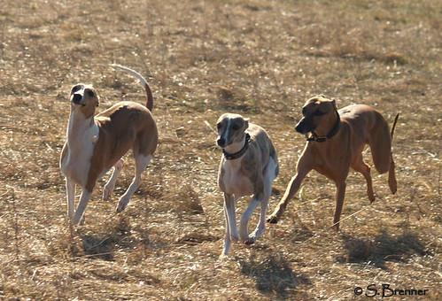 Nisha, Klara and Jasper
