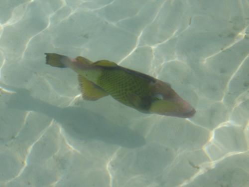 IMG00156  魚
