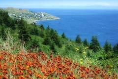Wildflower View (Clyde Barrett) Tags: ocean flowers trees sea newfoundland scenic wildflowers nl nfld conceptionbay naturesfinest bishopscove abigfave clydebarrett