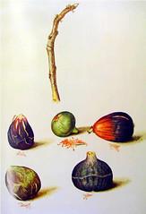 obra de Cristóbal Vilella