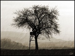 tree (claudia hering (sundance)) Tags: tree shots framed natur explore lonely baum outstanding thesource naturesfinest allein i500 outstandingshots interesgness11 thegoldenmermaid