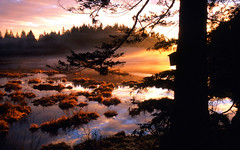 Mist on the Marsh (justb) Tags: park pink blue trees sunset sky orange mist color reflection tree nature water misty clouds port scenery colorful reserve birdhouse coquitlam marsh waterfowl regional minnekhada abigfave colorphotoaward impressedbeauty