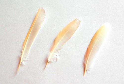 Les plomes del Naranjito