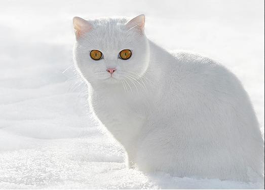 Branco no preto