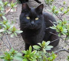 Symbolic Meaning of Black Cats (Three of Them) - symbolic