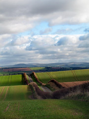 Rollercoaster Road-Spring fields (billtam) Tags: trees sky colour green clouds canon landscape scotland spring bravo hills fields roads coolest hedges a620 helluva thebigone scottishborders instantfave specland abigfave impressedbeauty aplusphoto superbmasterpiece diamondclassphotographer platinumheartaward excellentscenic excapture