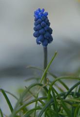 A small flower (cienne45) Tags: carlonatale cienne45 natale italy naturesfinest 1on1flowers ilovenature fv10 i500 interestingness205 explore exploreexset explore1336