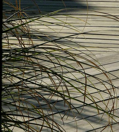 Sea grass, shadows and boardwalk