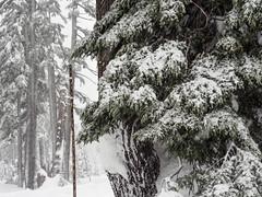 PC040627-1 (Camera Bread) Tags: olympus olympusomdem5 omdem5 omd em5 14150mm 14150mmii 14150mmiif4056 olympus14150mmii mzuiko14150mmiif456 mzuiko craterlake craterlakenationalpark oregon pnw winter wintertime winterhiking hikinginwinter frozen