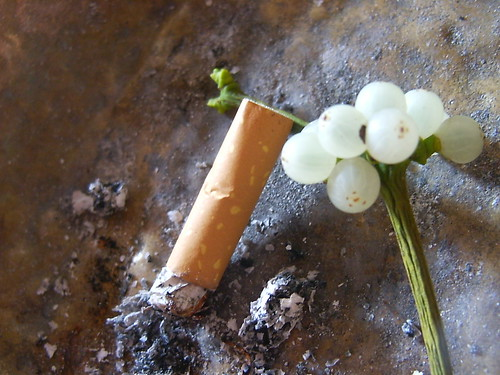 Berries and cigarettes