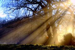 Rays (Today is a good day) Tags: uk england mist topf25 fog geotagged topf75 bravo quality chilterns backlit sunrays tring sunbeams ashridge picturethis topf400 abigfave toptiagd megatopofthefog