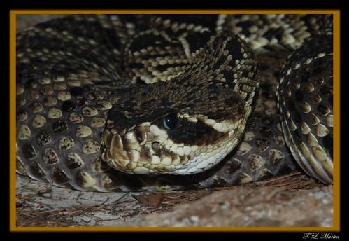 Snakes : Animals