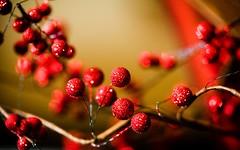 Your Poison Love and Other Lies (Thomas Hawk) Tags: california christmas city usa losangeles berries unitedstates 10 unitedstatesofamerica southerncalifornia twigs tujunga fav10