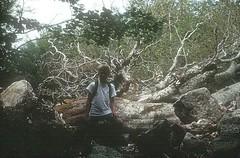 Dans la forêt vers les bergeries des Pozzi