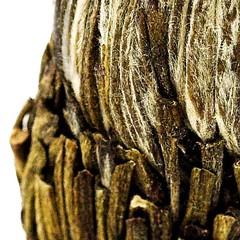 d005614-01 (marco71) Tags: tea greentea chinassecret