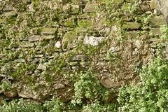 Textura: pared con musgo (Paco Vila) Tags: musgo pared texturas