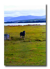dingle peninsula (.finding.ireland.) Tags: ireland horse irish west green 2004 bay march south eire celtic gaelic ventry besidethesea findingireland coisfarraige scenicsnotjustlandscapes ainmhithe pinterest