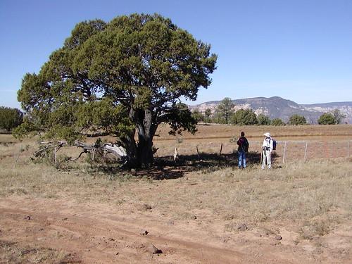 A670_Tree