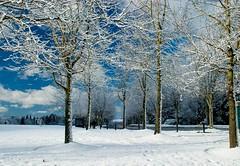 MS Snow