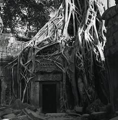 Ta Prohm - door way, Angkor, Cambodia. (ndnbrunei) Tags: travel blackandwhite rolleiflex rolleigallery