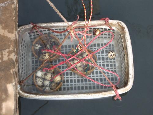 boil egg in basket with natural hot spring