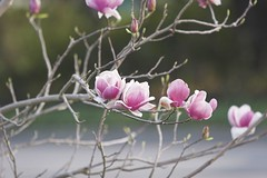 IMG_6250-01 (anythingviet) Tags: flowers viet anything