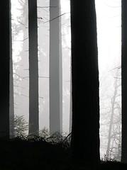 No colors! (Gerlinde Hofmann) Tags: autumn mist tree silhouette forest germany woods village herbst thuringia trunk baum autumnal conifer nadelbaum herbstlich konifere nobw resembling ähnlich bürden similartocolumn